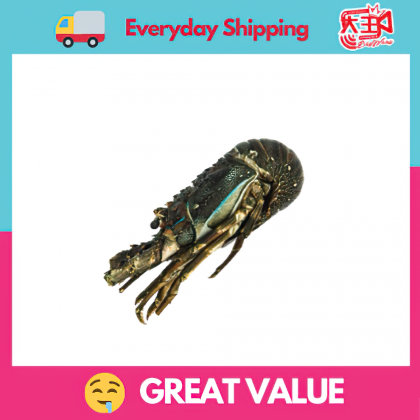 [Same Day Delivery] 180 - 200g Lobster